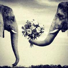 Slon - symbol štěstí