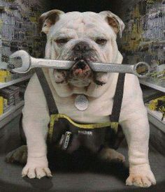 :)Wish Buster could turn a wrench, problem he would probably treat the wrench as a toy such jaws of steel.♡♡♡