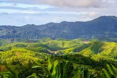 Madagascar rainforest https://www.holidayfactors.com/madagascar/
