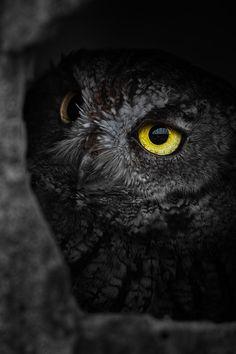 owl(by Masato Mukoyama)