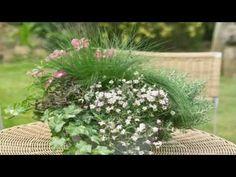 Gypsophila  - flowering plants Flowering Plants, Planting Flowers, Gypsophila, Herbs, World, Youtube, Flower Plants, Herb, The World