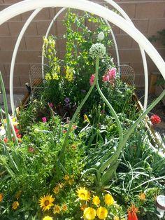 Gardening in las vegas