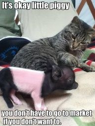 more like dont worry little piggy I will eat you so you dont have to go to market ;)