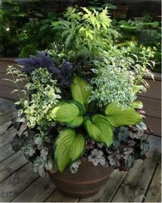Perennials in pots- our favorites. July 2014 MD Thymes