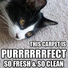 Everybody loves clean carpets!