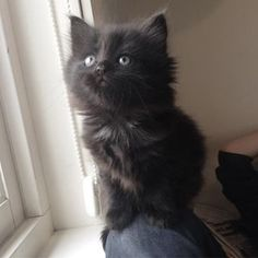 #whatsup Black Kittens, Photo And Video, Cats, Animals, Instagram, Gatos, Animales, Animaux, Animal