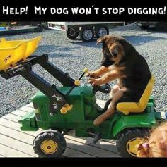 How to keep your dog from digging! ~> https://www.animalhub.com/how-to-keep-a-dog-from-digging/