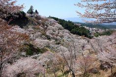 吉野山   Cherry blossoms in full bloom , Nara Prefecture Yoshino.  Saved from http://tabippo.net/japan-landscapes/