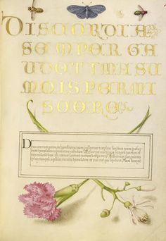 Joris Hoefnagel (illuminator)  [Flemish / Hungarian, 1542 - 1600], and Georg Bocskay (scribe)  [Hungarian, died 1575],                  		            Insects, Carnation, and Judas Tree,                      		        Flemish and Hungarian, 1561 - 1562