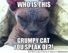 Grumpy Cat Good | Grumpy Cat's arch nemesis