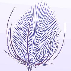 Thistle Drawing | Above - detail of the teasel head of the Giant Wild Teasel Stencil 1 ... Bleach Drawing, Abstract Embroidery, Embroidery Designs, Thread Painting, Silk Painting, Botanical Line Drawing, Pottery Painting Designs, Organic Art, Flower Doodles
