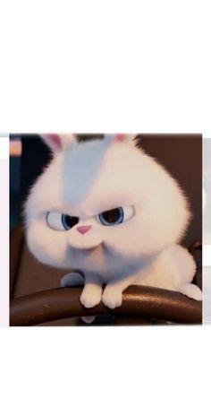 Rabbit Wallpaper, Bear Wallpaper, Cute Cartoon Characters, Cartoon Pics, Cute Baby Bunnies, Cute Baby Animals, Snowball Rabbit, Cute Bunny Cartoon, Fluffy Bunny