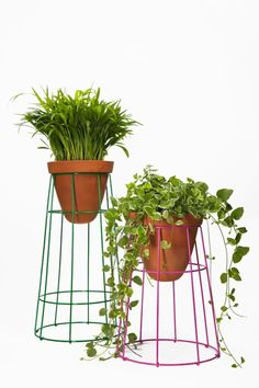 Cute! Painted tomato cages turned upside down with trimmed ends to make plant stands.