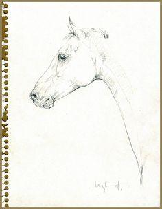 Equinesculptures.com [Sketch1]