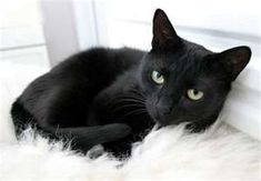 Black Cats: this looks like my kitty