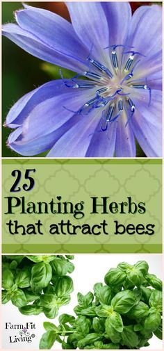 Do you have flowers and plants you want the bees to pollinate for you? Here's 25 planting herbs that attract bees into your gardens. Hydroponic Gardening, Hydroponics, Organic Gardening, Herb Gardening, Gardening Vegetables, Easy Garden, Lawn And Garden, Garden Beds, Drought Tolerant Garden