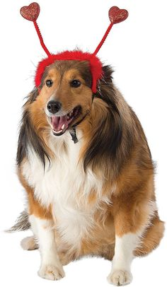 303ea7de69f1 Rubie's Costume Company Red Heart Dog & Cat Boppers Dog Mom, Holiday  Gifts,