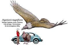 This blog has fantastic size comparisons of humans and various extinct birds (blog in Spanish). The one pictured is Argentavis, the largest flying bird ever known to have existed - found in Argentina. It is related to the Andean Condor.