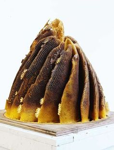 Honeycomb Constructs - Hilary Berseth's Bee-Assisted Art (GALLERY)