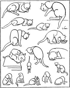 Image Result For Catamount Coloring Book