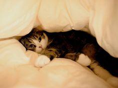 I is stuck.