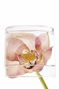 flower in a glass