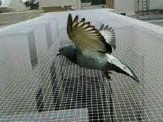 Bird Netting installation services in Bangalore and Mumbai. Hicare specializes in anti-bird netting services by Trained Experts. We offer Special HDPE net quality. Get high-quality anti-bird netting for your residential building. Call us now at 39889988 Bird Netting, Pigeon Bird, All Birds, Bird Species, Mumbai, Pune, Pest Control, Control System, Organizations