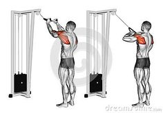 Exercising. Cable Rope Rear Delt Rows
