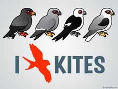 Birdorable Snail Kite, Mississippi Kite, Swallow-tailed Kite, and White-tailed Kite