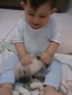 Brazil: Punish irresponsible mother who let toddler hit family kitten! | YouSignAnimals.org