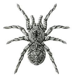 Tarantula © Alex Konahin