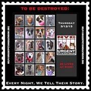 """Adopting a Dog From The """"To Be Destroyed"""" Album: If you decide to adopt a dog that is on the """"To Be Destroyed"""" list, you must act fast. Any dog on the. Pet Adoption, Animal Adoption, Kill List, Southern Pride, Types Of Animals, Together We Can, I Am Scared, Baby Dogs, Animal Rights"""
