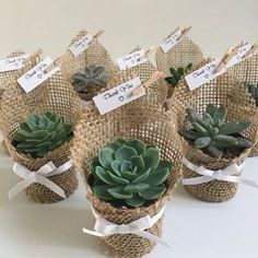 Succulent wedding favors - Succulent favors for weddings, birthdays, christenings, baby showers or any special occasion weddingfavors wedding favors ad succulent Succulent Wedding Favors, Succulent Gifts, Wedding Flowers, Wedding Plants, Succulant Wedding, Garden Wedding, Succulent Centerpieces, Wedding Dresses, Wedding Favors And Gifts