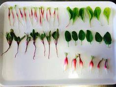 En @torralbenc nos hemos levantado con estas micro-verduras de nuestra huerta. Que pasada! pic.twitter.com/WhDcOCjuCn