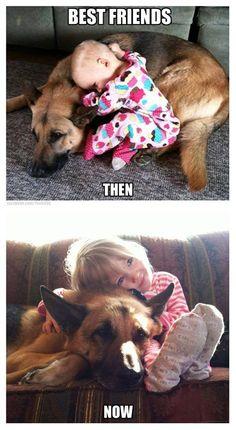 The German Shepherd Dog Community