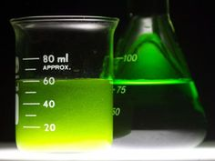 Gregory Martin, 2014 Google Science Fair, biofuel, algae, algae biofuel, nitrogen depletion, biofuel production,