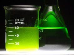 Gregory Martin, 2014 Google Science Fair, biofuel, algae, algae biofuel, nitrogen depletion, biofuel production,
