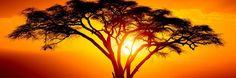 Танзания – одна из самых посещаемых и интересных стран Восточной Африки. Огромные просторы Национальных парков, конусы давних вулканов, дикие племена масаев, просторные пляжи Занзибара, разнообразие животного мира и, конечно же, сафари, все это делает Танзанию мега популярной среди состоятельных и взыскательных туристов.До 1964 года на территории страны располагалось две колонии: ...
