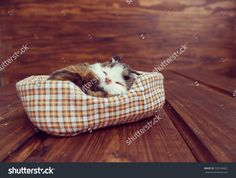 Find Toy Sleeping Cat stock images in HD and millions of other royalty-free stock photos, illustrations and vectors in the Shutterstock collection. Thousands of new, high-quality pictures added every day. My Photos, Photo Editing, Royalty Free Stock Photos, Sleep, Toys, Illustration, Pictures, Image, Editing Photos