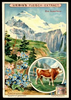 """Liebig's Beef Extract  """"Alpine Mountains, Flora & Fauna""""  German issue, 1903."""