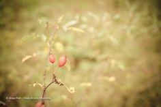 Le début de l'automne en Belgique