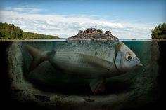 This is an interesting photo manipulation. It sends a powerful message too. The message I get from it is that humans need to be more aware of where they are building at, so they don't destroy the environment. People also have to be aware that other animals live here too and were here before us. This sky, tress, fish, and water look very realistic. I like how the soil is dropping into the water. The artist did a good job of showing the fish under the water and the house on top of the water.