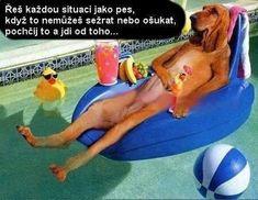 Really Funny Joke, Funny Stuff, Bad Humor, Motto, Beach Mat, Cool Pictures, Funny Jokes, Memes, Karma