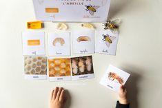 Récapitulatif de notre atelier maternelle IEF d' activités sur les abeilles. Étude du cycle de vie de l'abeille, math, lecture, écriture et fiches d'activités à télécharger