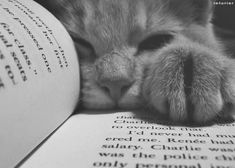 34 Quotes Only Cat Owners Will Understand - Funny Cat Quotes Crazy Cat Lady, Crazy Cats, Cute Cats, Funny Cats, Book Lovers, Cat Lovers, Animals And Pets, Cute Animals, Funny Animals
