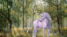 Unicorn, Forest, Fairy Tales