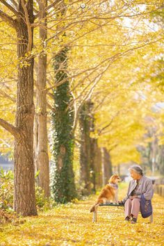 Japanese Photographer Perfectly Captures His Grandmother's Playful Nature In Touching Portraits – Miif Plus Animals Of The World, Animals And Pets, Cute Animals, Round The World Trip, Autumn Scenes, Lovely Creatures, Shiba Inu, Mans Best Friend, Best Funny Pictures