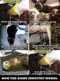 Cows do not magically produce milk. And we don't need it for optimal human health.