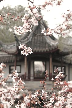 cherry blossom in japan Aesthetic Japan, Japanese Aesthetic, Japanese Culture, Japanese Art, Japanese House, Beautiful Places, Beautiful Pictures, Inspiration Art, Art Japonais