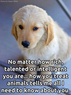 473 Best Be Kind To Animals Images Dog Cat Pets I Love Dogs